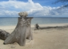 Koralle über Horizont (Foto: chari , Gili Meno, Lombok, Indonesien am 13.12.2014) [4353]