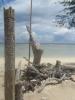 Pfahl am Strand (Foto: chari , Gili Meno, Lombok, Indonesien am 13.12.2014) [4354]