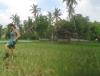 Arbeiterin im Reisfeld (Foto: chari , Ubud, Bali, Indonesien am 22.12.2014) [4380]