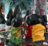 Navagraha am Sri Mariamman Temple (Foto: chari , Medan, Sumatra, Indonesien am 14.04.2015) [4417]