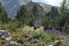 Botanischer Alpengarten Schachen (Foto: Bbb auf wikivoyage am 01.08.2007) [5109]