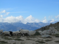 Am Bocca d´Oru nach dem anstrengenden Anstieg vom Col de Verde (Foto: katarina , Alta Rocca, Korsika, Frankreich am 30.08.2011) [2386]