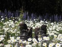 bezaubernde Frühlingswiese (Foto: katjaw , Vikos-Schlucht, Epirus, Griechenland am 22.04.2011) [3688]