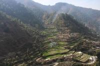 Bergdorf mit Terrassenanbau (Foto: katarina , Uttarkashi, Uttarakhand, Indien am 31.01.2018) [4952]