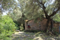 Olivenhain auf dem Klostergelände (Foto: katarina , Santa Maria di Lota, Korsika, Frankreich am 20.05.2018) [5038]