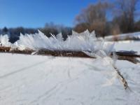 Eisfedern am Obersee (Foto: katarina , Bielefeld, Unteres Weserbergland 53, Deutschland am 13.02.2021) [5393]